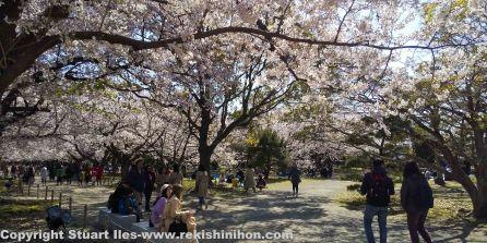 Honmaru in spring