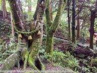 Futago tree